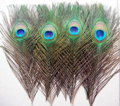 Ostrich feather for decoration