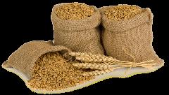 Grain fodder
